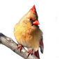 Cardinaltruth