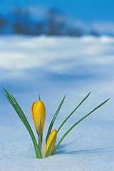 flowernthesnow