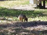 Foxfoot