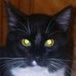 Gonzo_kitty
