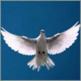 holdfast2peace