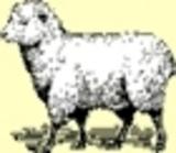 lil_lamb