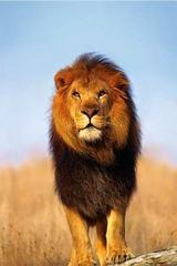 Lion4justice
