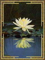 lotuspond