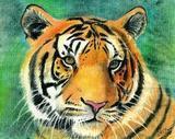 TigersEyeDowsing