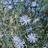 wldflowers