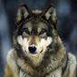 Wolfang