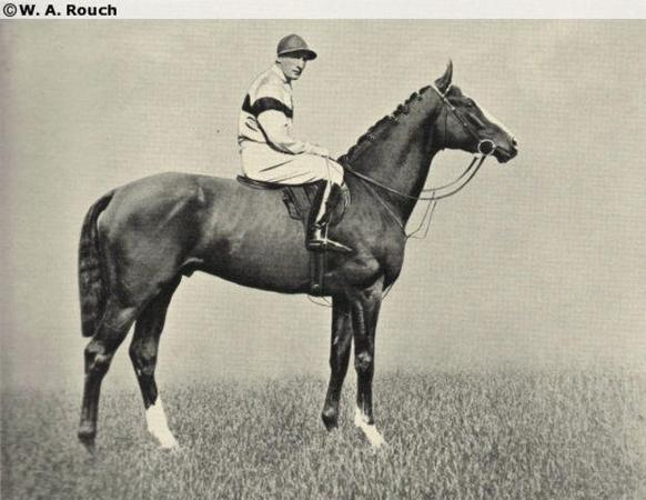 betfair forum horse racing